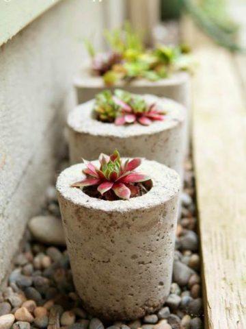 DIY Concrete Planter Projects