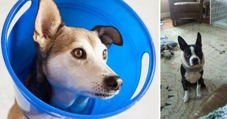 DIY-Dog-Cone