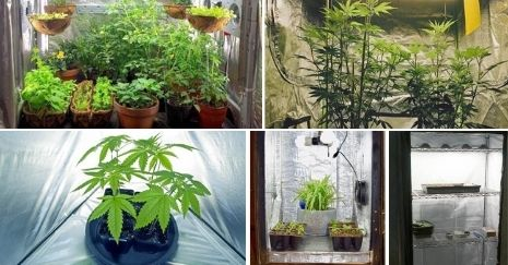 DIY-Grow-Tent-Projects