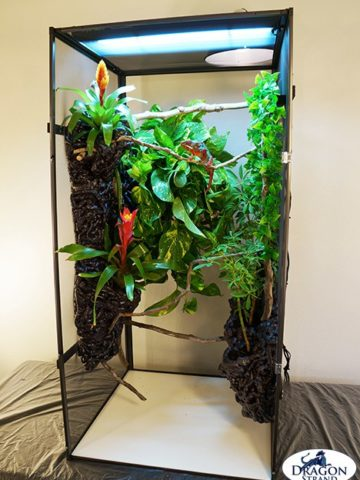 Homemade Chameleon Cage Ideas