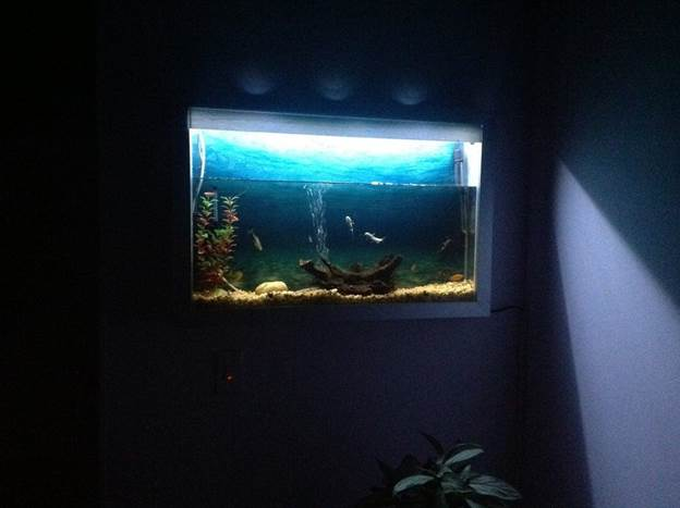 12. DIY Wall Aquarium