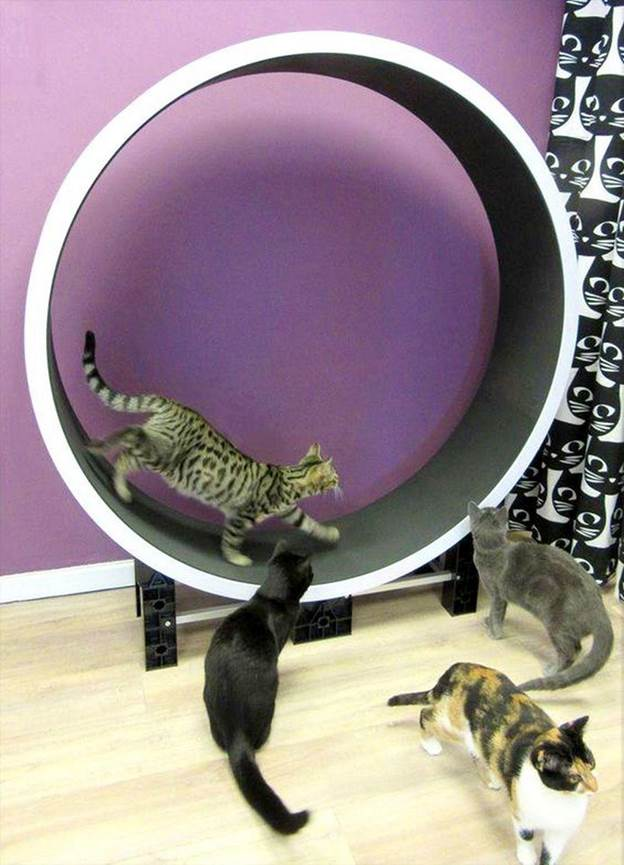 13. How To Build A Cat Wheel