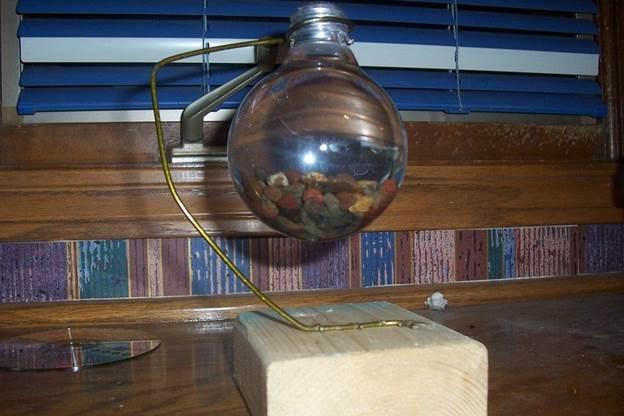 20. Light Bulb Shrimp Aquarium