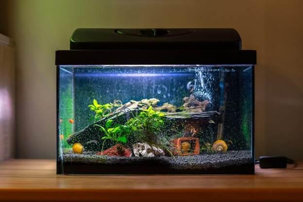 5. How To Build An Aquarium At Home