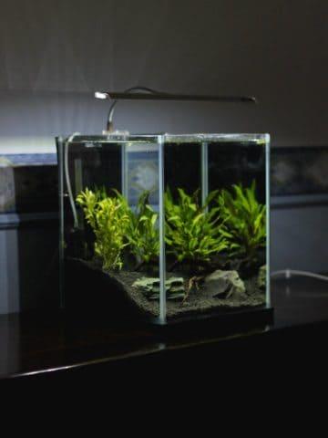 DIY Aquarium Projects