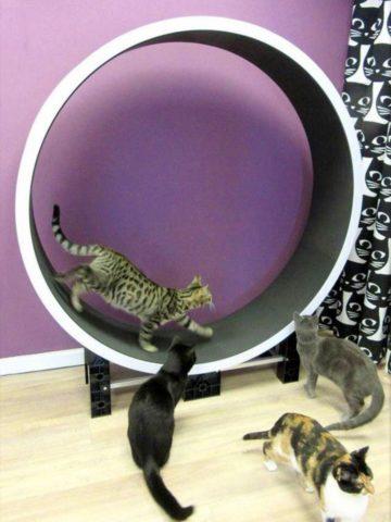 DIY Cat Wheel Plans