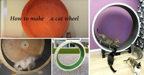 DIY Cat Wheel Plans