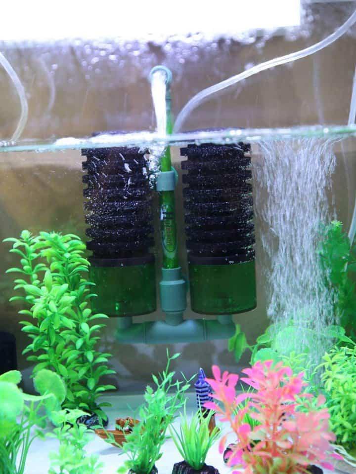 DIY Sponge Filter Ideas
