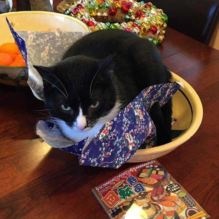 16. Deluxe Cat Bed DIY