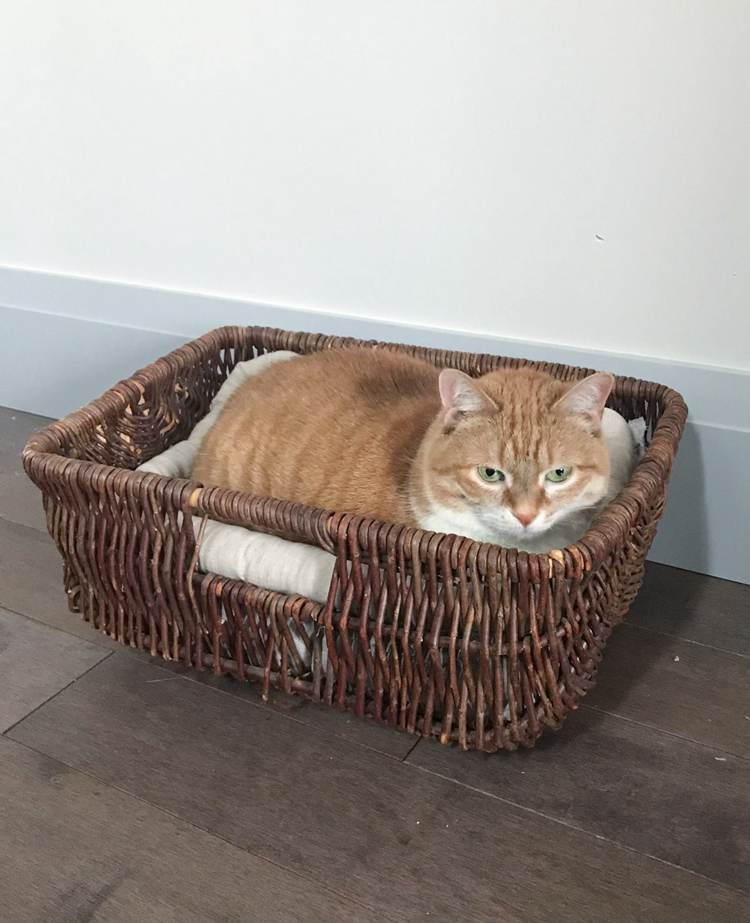 23. DIY Basket Cat Bed