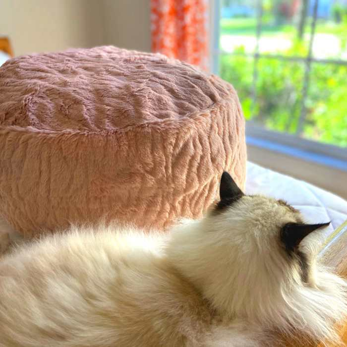 4. DIY Bean Bag Chair For Pets