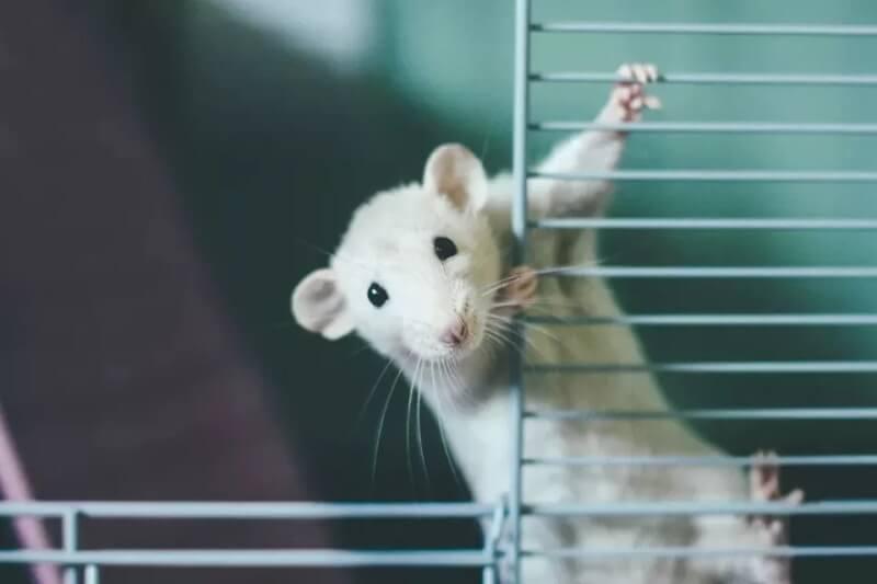 4. DIY Rat Cage