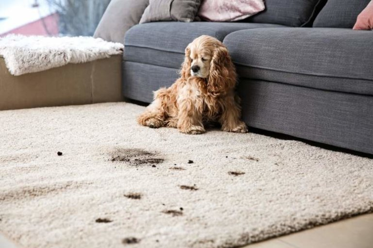 7 Carpet Cleaning Tips And Tricks