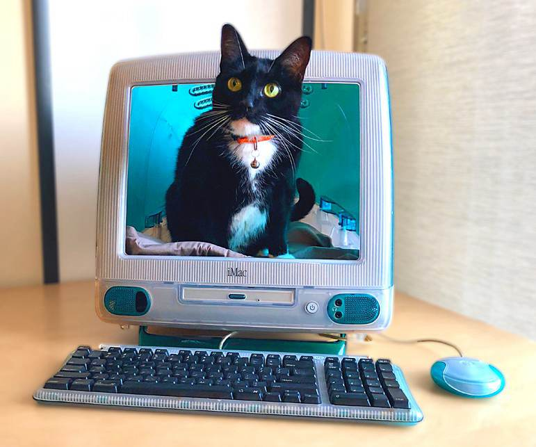 9. DIY iMac Cat Bed