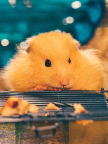 DIY Rat Cage Ideas
