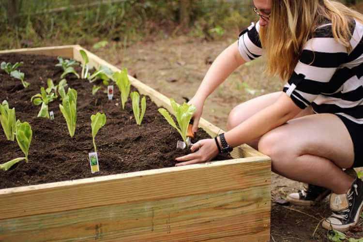 12. DIY Cheap Raised Garden Bed