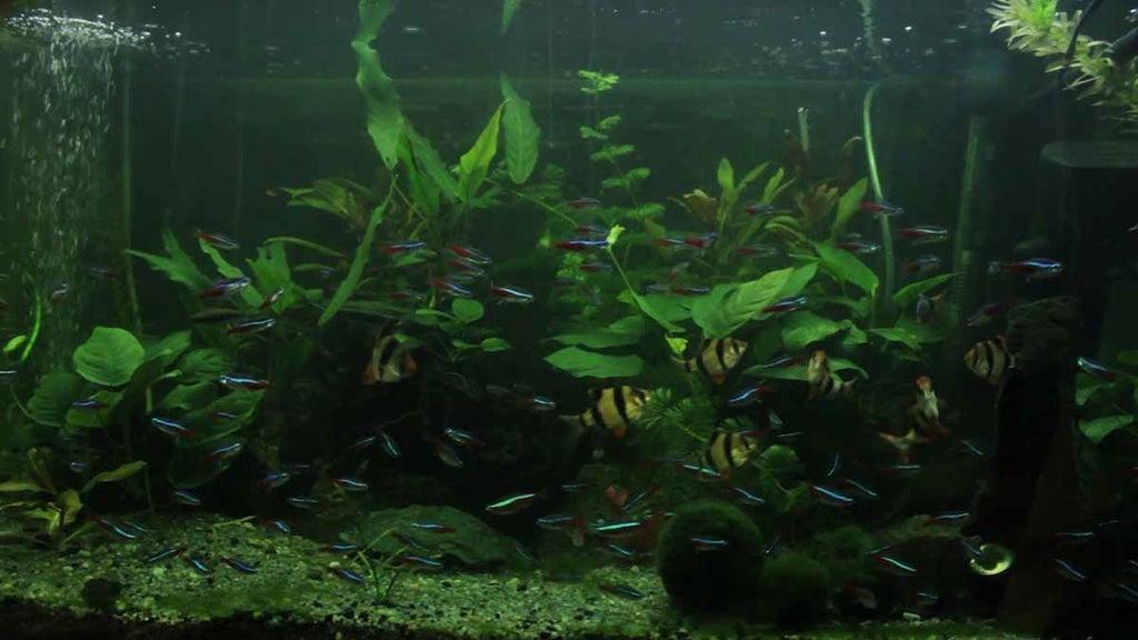 14. DIY Aquarium LED Light