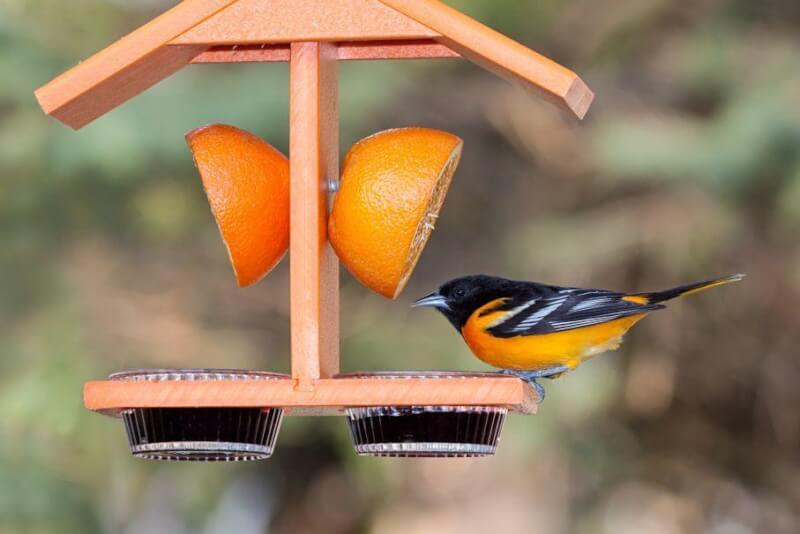 14. How To Make An Oriole Feeder