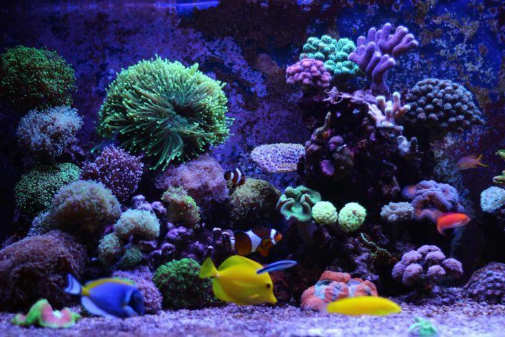16. DIY Reef Light Kit