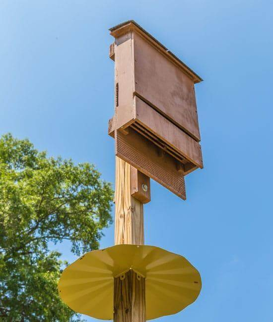 16. Tips On Building A Bat House