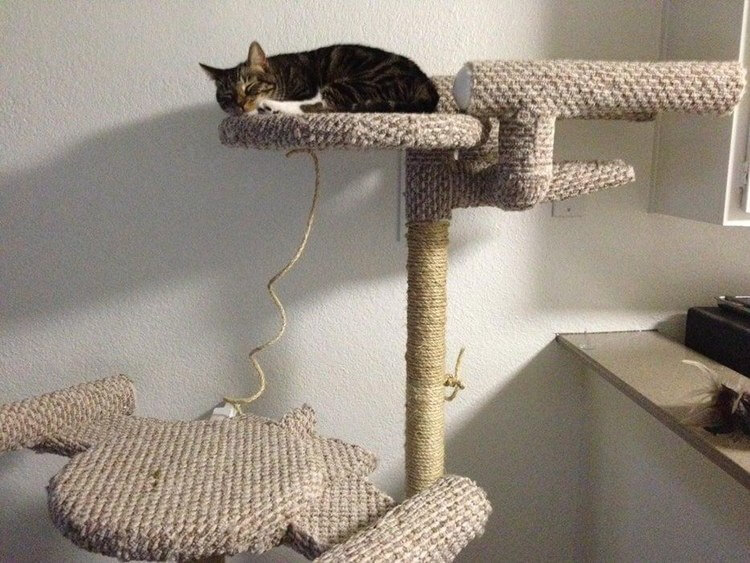 19. DIY Star Trek Cat Tree