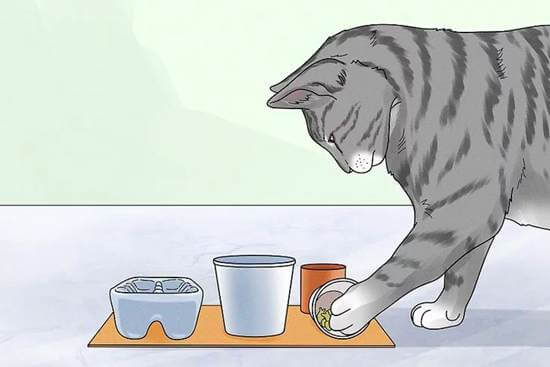 20 DIY Cat Feeder Plans_ How To Make A Cat Food Dispenser