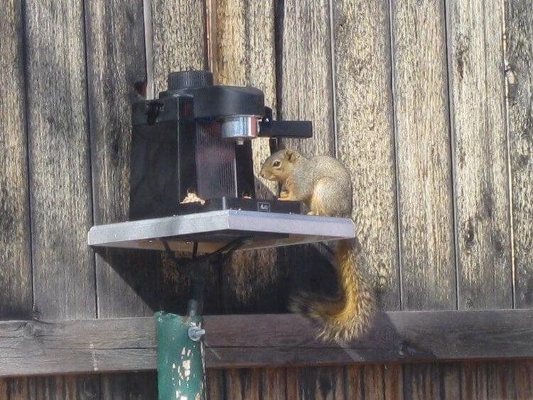 21. DIY Espresso Squirrel Feeder