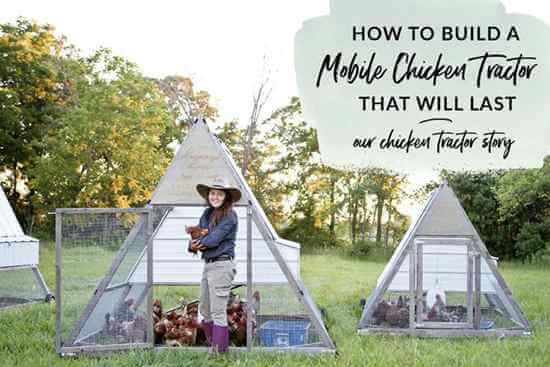 24 DIY Chicken Tractor Plans_ How To Build A Chicken Coop