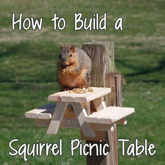 24. How To Build A Squirrel Picnic Table