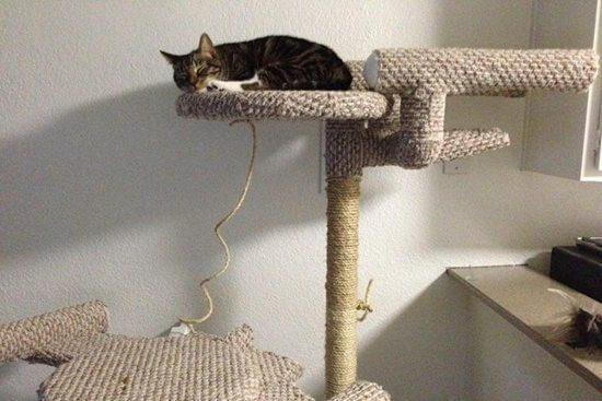 25 DIY Cat Tree Ideas_ Homemade Cat Tree Projects