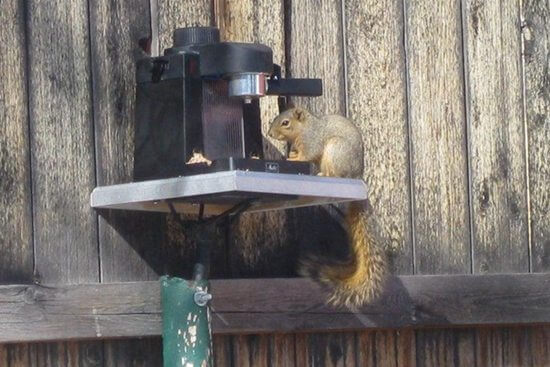 25 DIY Squirrel Feeder Plans_ Do It Yourself Easily