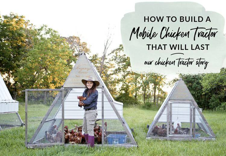 4. How To Build An A-Frame Chicken Tractor