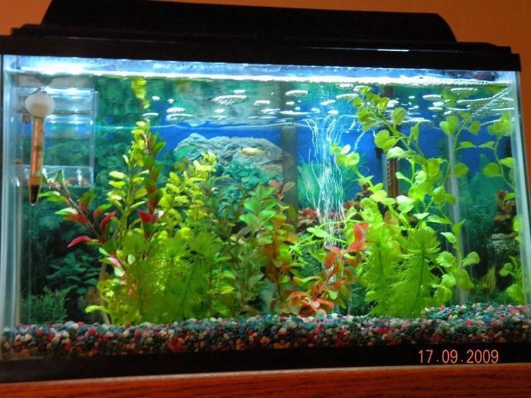5. LED Aquarium Light DIY