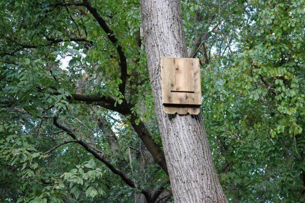 7. How To Build A Bat House