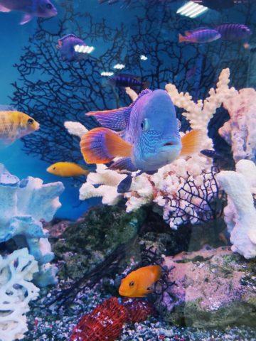 DIY Aquarium Light Ideas