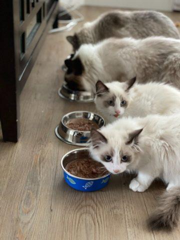 DIY Cat Feeder Plans