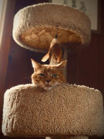 DIY Cat Tree Ideas