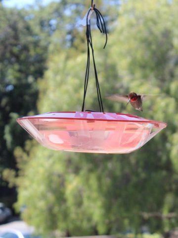 DIY Hummingbird Feeder Plans