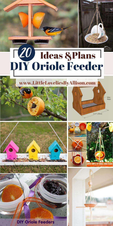 DIY Oriole Feeder Plans