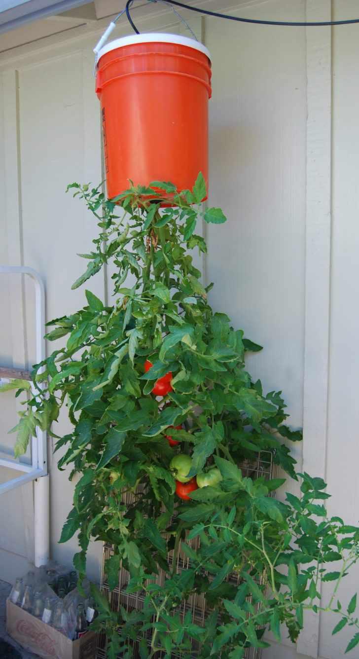 11. DIY Upside Down Tomato Cage