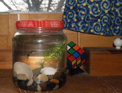 13. DIY Mini Aquarium