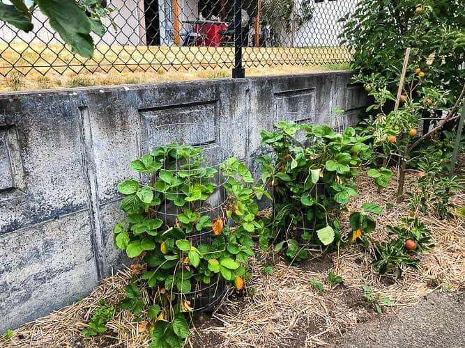 14. DIY Vertical Strawberry Planter
