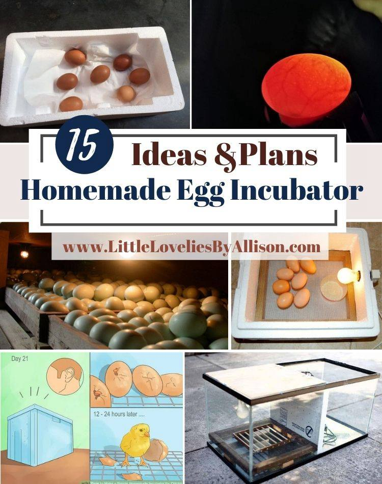 15 Homemade Egg Incubator Ideas_ How To Make An Egg Incubator
