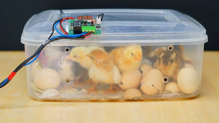 15. How To Make An Egg Incubator