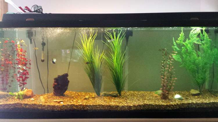 16. How To Setup A Fish Tank