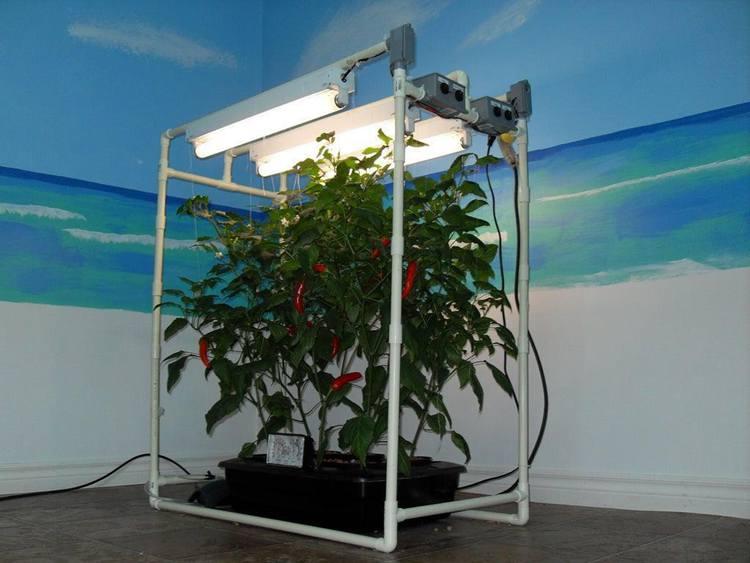 18. DIY Indoor DWC Hydroponic System