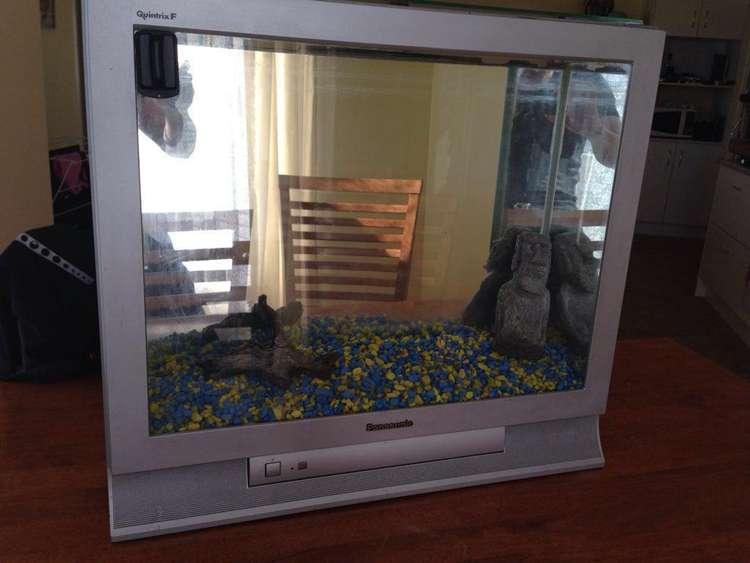 21. DIY TV Fish Tank