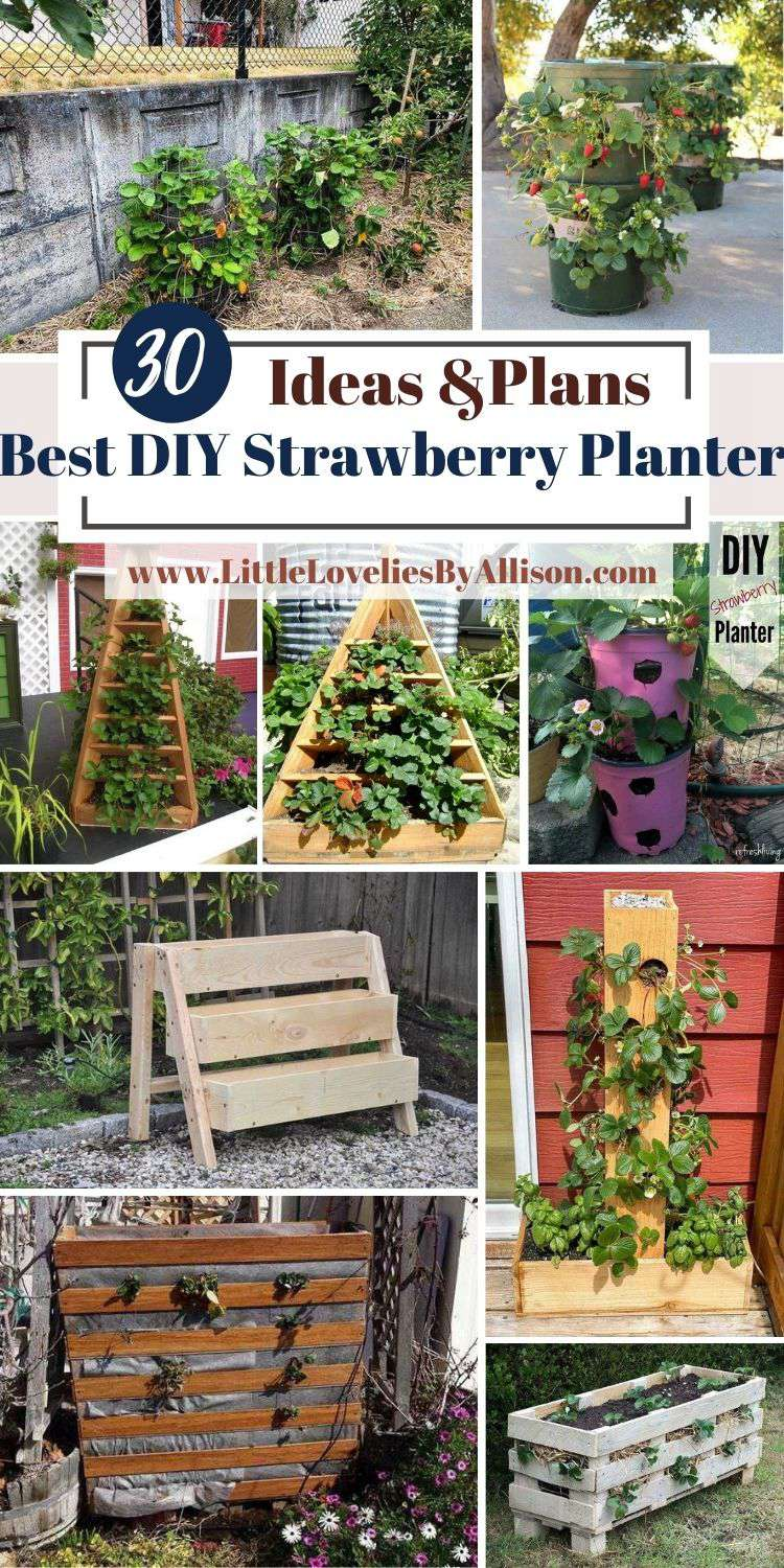 30 Best DIY Strawberry Planter Ideas In 2021_ DIY With Little Cost