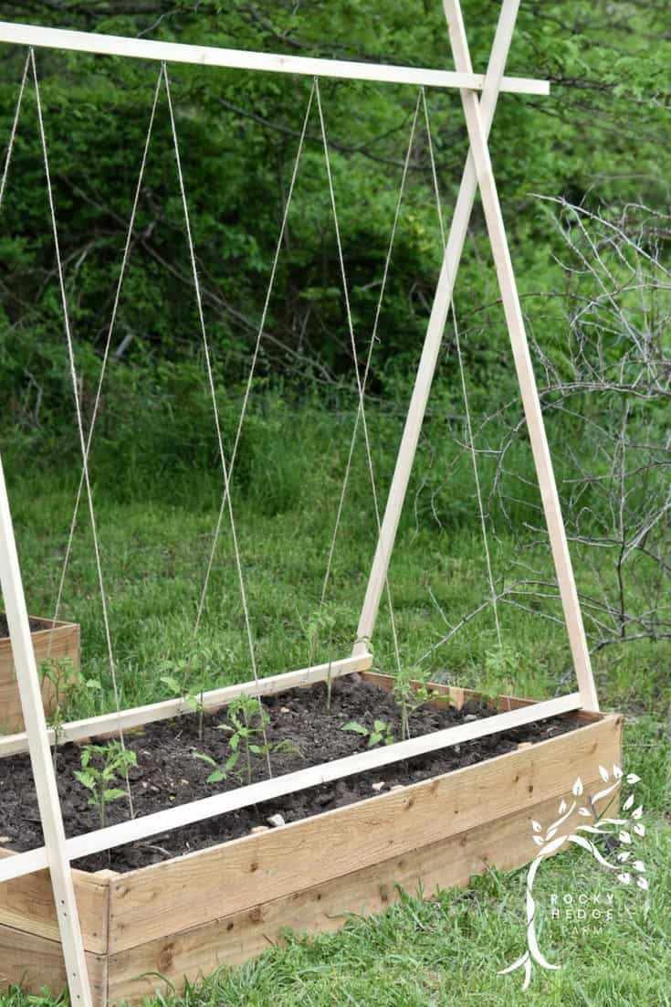 33. Easy String Tomato Trellis