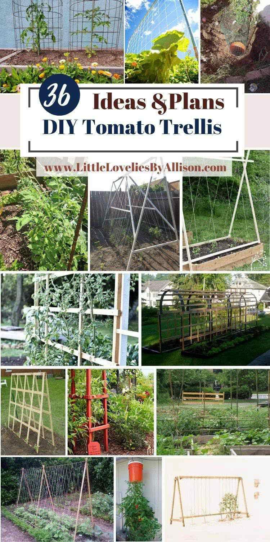 36 DIY Tomato Trellis _ Cage Ideas